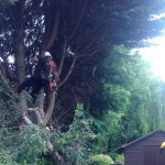Chester tree surgeon image