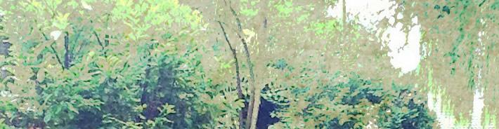 tree work February
